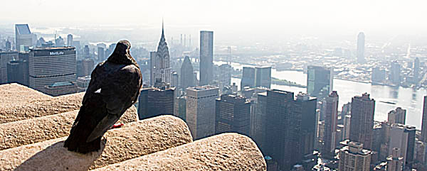 web Y2T7044 